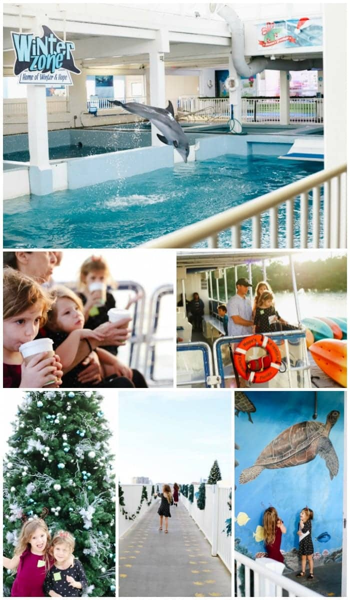 Christmas events in Tampa Florida / Family friendly Christmas events in Tampa Bay / The best Christmas events in Tampa / Holidays at the Clearwater Aquarium with Winter the Dolphin